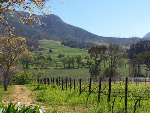 Bucolico paisaje en Constantia