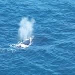 Ruta de ballenas