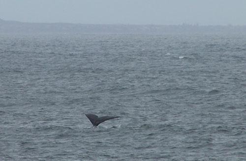 Colas de ballena entre dos oceanos