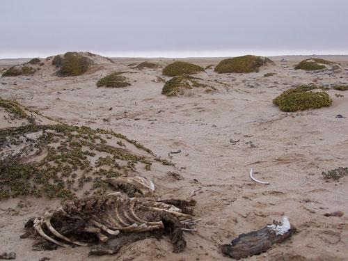 Namibia-Skeleton-Coast_esqueleto