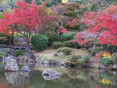 Cerezos en Kyoto