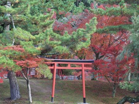 Pequeño Torii en Nara