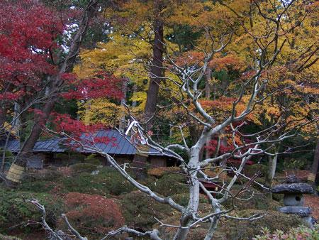 Paseo por el parque de Nikko