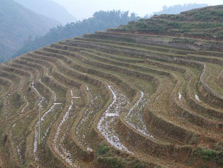 Campos de arroz sobre las colinas