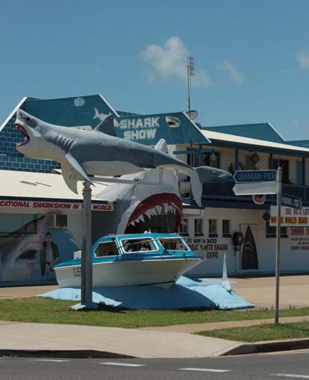 Tiburones a la vista