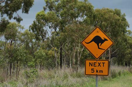 Canguros en la carretera