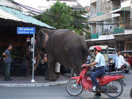 Elefantes por la ciudad (Phnom Penh)