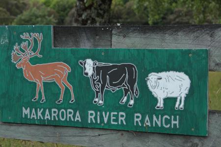La fauna en los ranchos