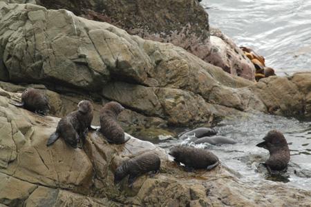 Guardería de focas cerca de Kaikoura