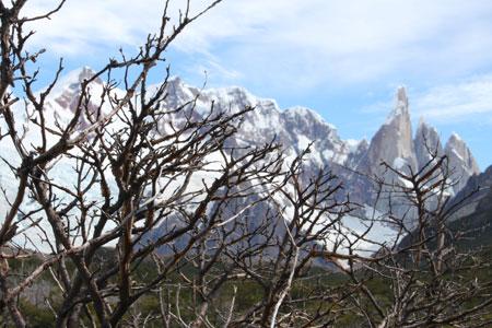 Cerro Torre y bosque de árboles muertos