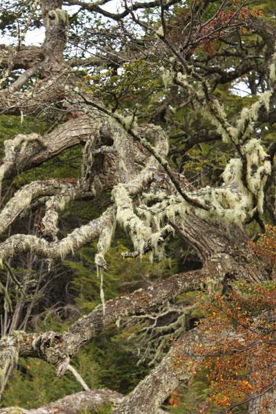 Vegetación austral en el Parque Nacional