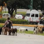 Paseadores de perros en Buenos Aires