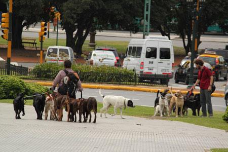 Passeadores de perros en Buenos Aires