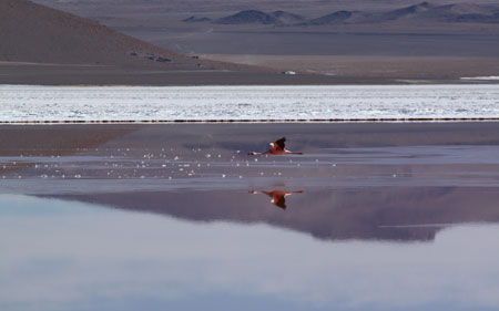 Flamencos sobre el lago