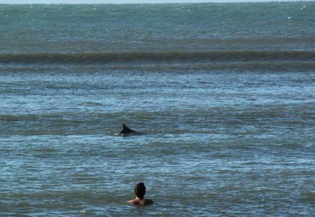 Delfines en Pipa